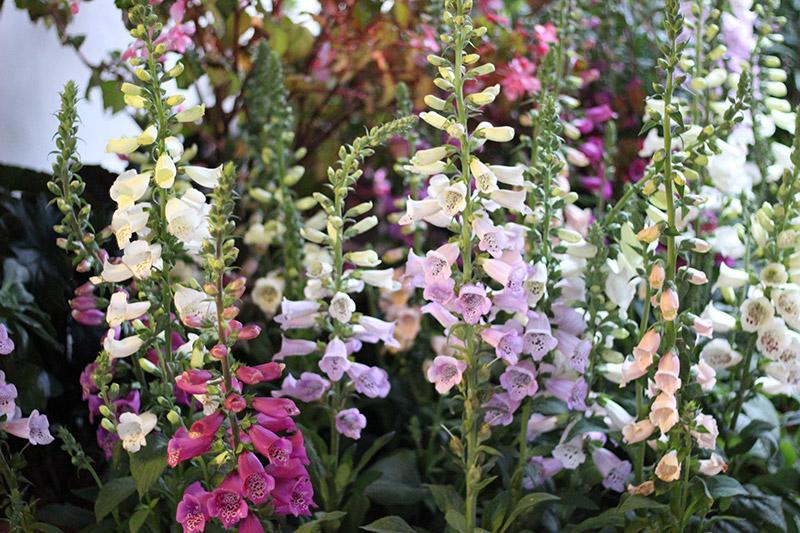 Flowers in Carmel-by-the-Sea