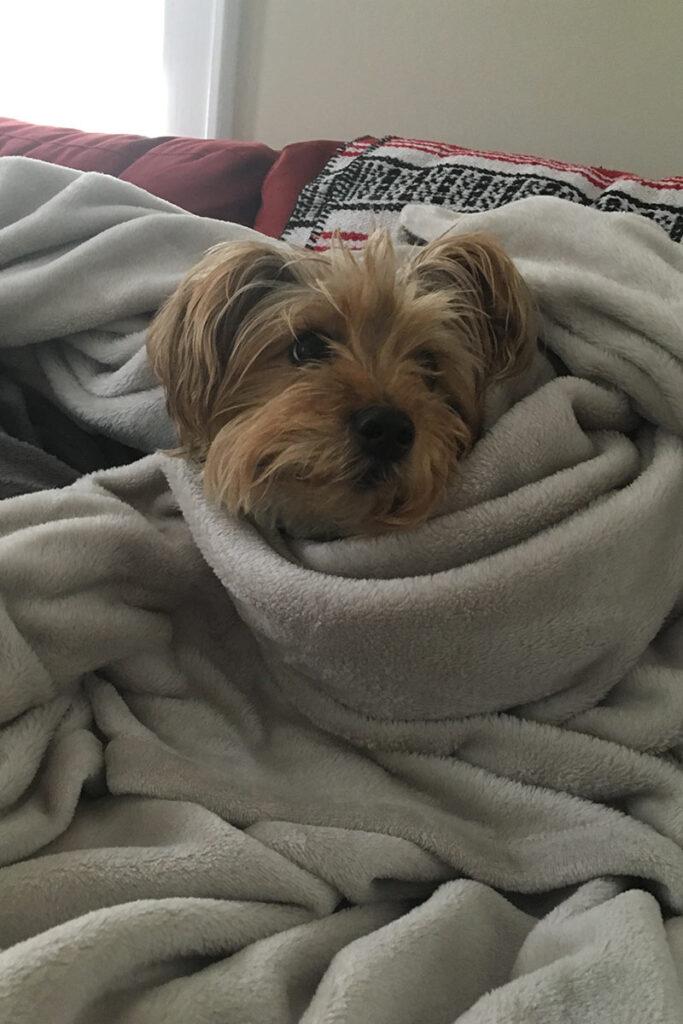 Schmidt wrapped in a blanket