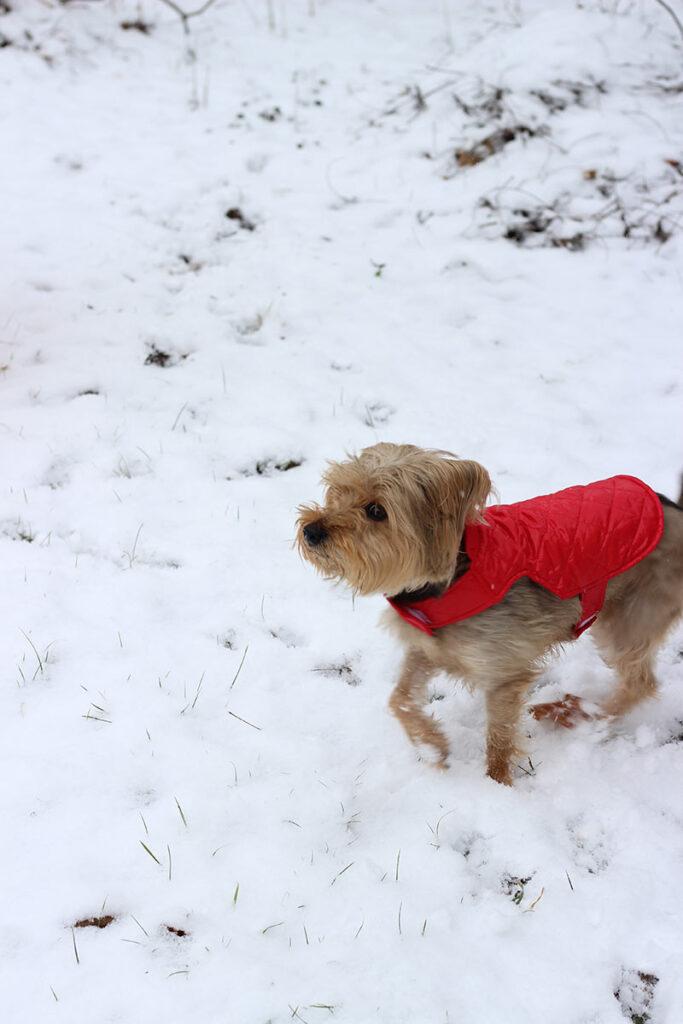 Schmidt in the snow