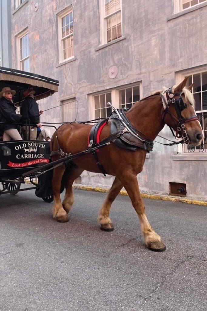 Charleston, SC carriage tour