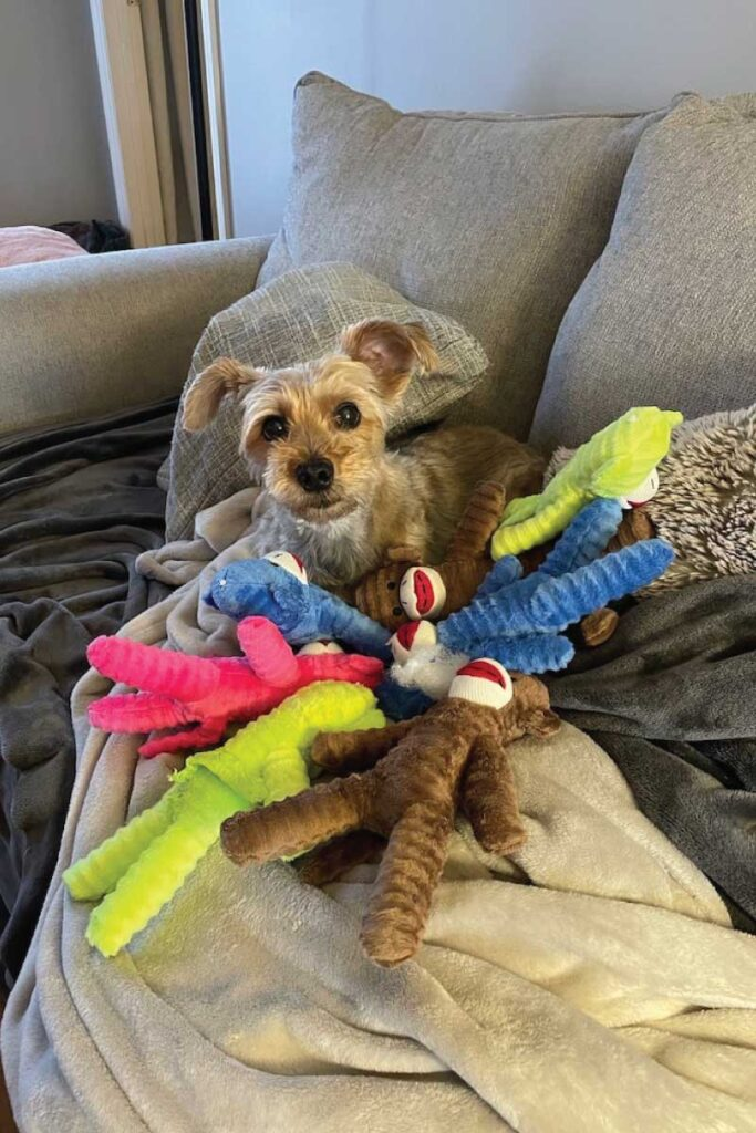 Schmidt with his stuffed toys